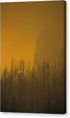 Haze Obscures Charred Pines Canvas Print by Michael S. Quinton