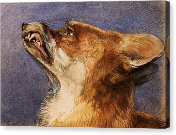 Head Of A Fox Canvas Print by John Frederick Lewis