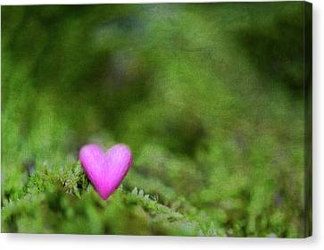 Heart In Moss Canvas Print by Alexandre Fundone