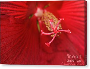 Heat Wave Canvas Print by Susan Smith