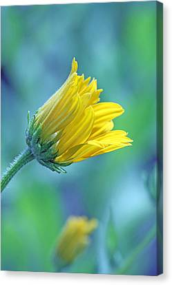 Hello World Canvas Print by Becky Lodes
