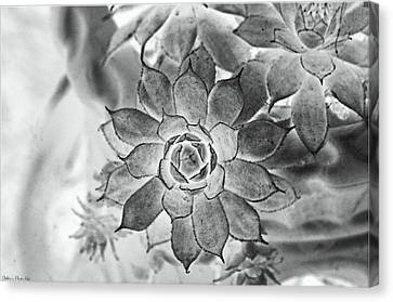 Hen And Chicks Digital Art Canvas Print by Debbie Portwood