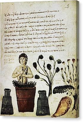Herbal Medicine, 10th Century Canvas Print by
