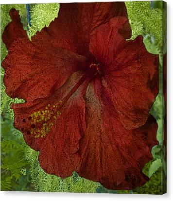 Hibiscus Plus Fern Canvas Print by Barbara Middleton