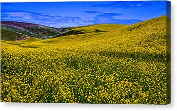 Hills Of Canola Canvas Print by David Patterson