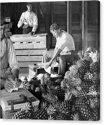 Historic Pineapple Factory - Florida - C 1906 Canvas Print by International  Images