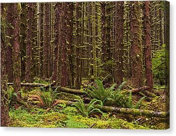 Hoh Rainforest Canvas Print by Mark Kiver