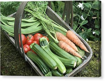 Home-grown Organic Vegetables Canvas Print by Sheila Terry