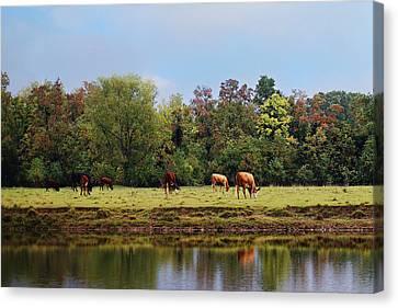 Home On The Range Canvas Print by Susan Bordelon