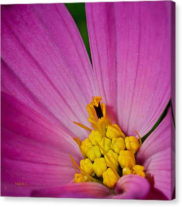 Honey Bee's Candy Dish Canvas Print by Mitch Shindelbower