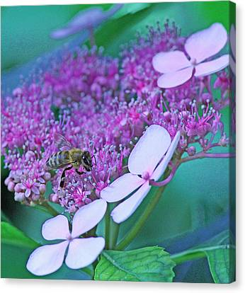 Honeybee On Pink Lace Canvas Print by Becky Lodes