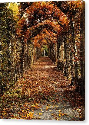 Hornbeam Alles, Birr Castle, Co Offaly Canvas Print by The Irish Image Collection