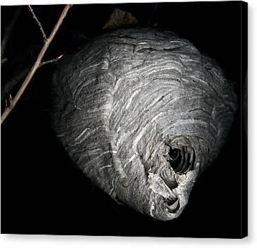 Hornet Nest Canvas Print by David Kleinsasser