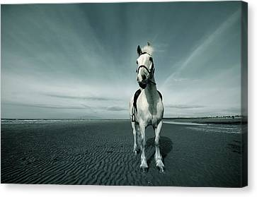 Horse At Irvine Beach Canvas Print by Mikeimages