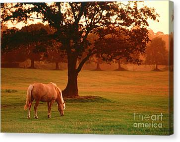 Horse Canvas Print by Carl Purcell and Photo Researchers