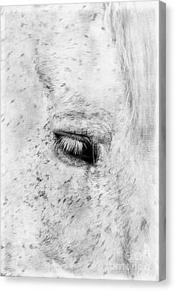 Horse Eye Canvas Print by Darren Fisher