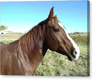 Horse In Chocolate Canvas Print by Brian  Maloney