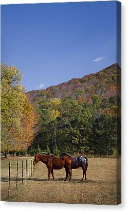Horses And Autumn Landscape Canvas Print by Kathy Clark