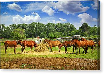 Horses At The Ranch Canvas Print by Elena Elisseeva