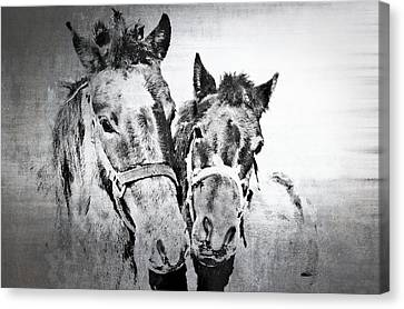 Horses By The Road Canvas Print by Kathy Jennings