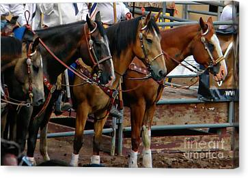 Horses Canvas Print by Michelle Frizzell-Thompson