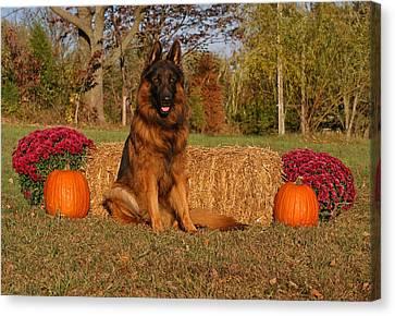 Hoss In Autumn II Canvas Print by Sandy Keeton
