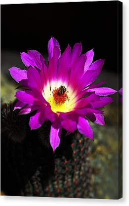 Hot Pink Cactus Canvas Print by Saija  Lehtonen
