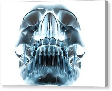 Human Skull, Computer Artwork Canvas Print by Robert Brocksmith