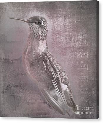 Hummer Portrait Canvas Print by Cris Hayes