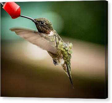 Hummers In The Garden Three Canvas Print by Michael Putnam