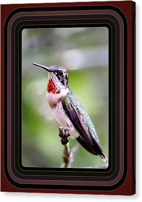 Hummingbird Card Canvas Print by Travis Truelove