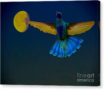 Hummingbird Moon Canvas Print by Al Bourassa