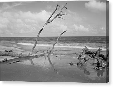 Hunting Island State Park Canvas Print by Donnie Smith