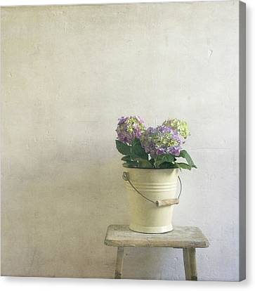 Hydrangea Resting On Stool Canvas Print by Paul Grand Image