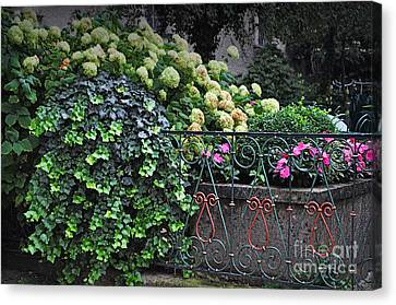 Hydrangeas Salzburg Canvas Print by Mary Machare