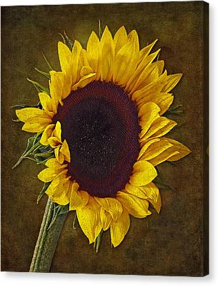 I Dance With The Sun Canvas Print by Susan Candelario
