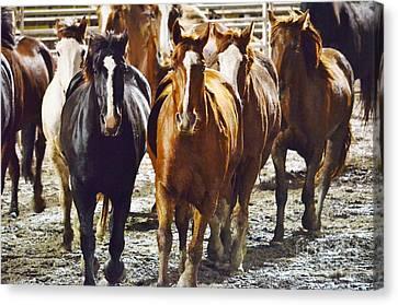 I Herd That Canvas Print by Lynda Dawson-Youngclaus