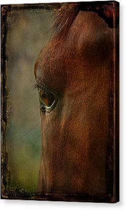 I See You Canvas Print by Davandra Cribbie