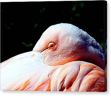 I See You Canvas Print by Nick Kloepping