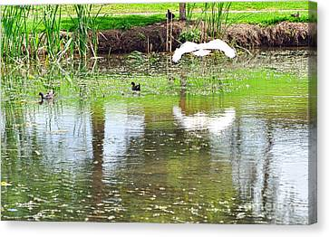 Ibis Over His Reflection Canvas Print by Kaye Menner