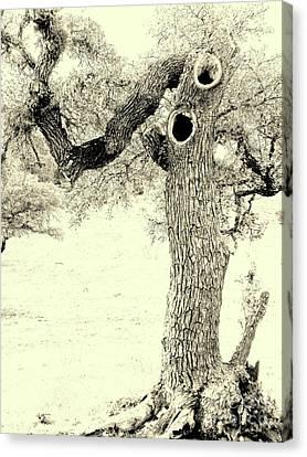 Ichabod Lane Canvas Print by Joe Jake Pratt