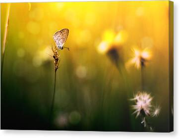 Imagine Canvas Print by Yustus Waskito Budi P
