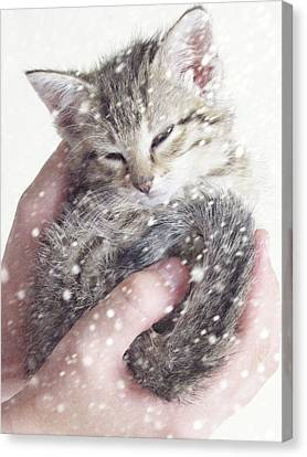 In Safe Hands II Canvas Print by Amy Tyler