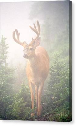 In The Mist Canvas Print by Tom and Pat Cory