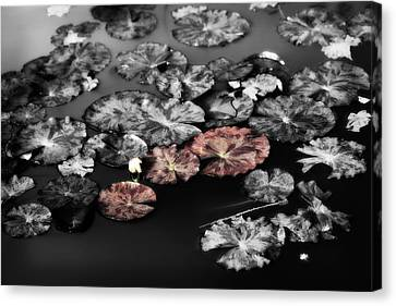 In The Pond Canvas Print by Bonnie Bruno