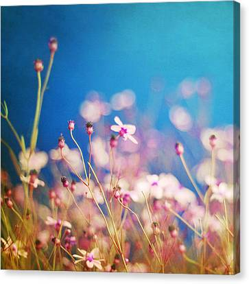 Infatuation In Blue  Canvas Print by Amy Tyler