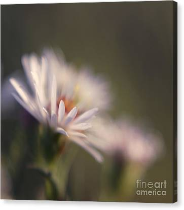 Innocence 02 Canvas Print by Variance Collections