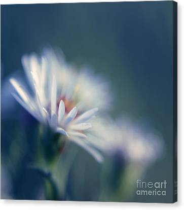 Innocence 03b Canvas Print by Variance Collections