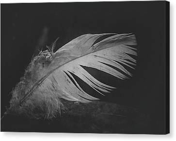 Innocence Lost Canvas Print by Odd Jeppesen