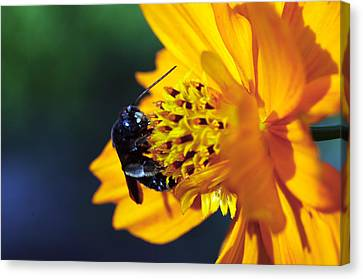 Insect And The Wild One Canvas Print by Wanda Brandon